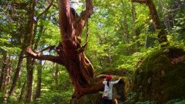 岩にへばりつく大木