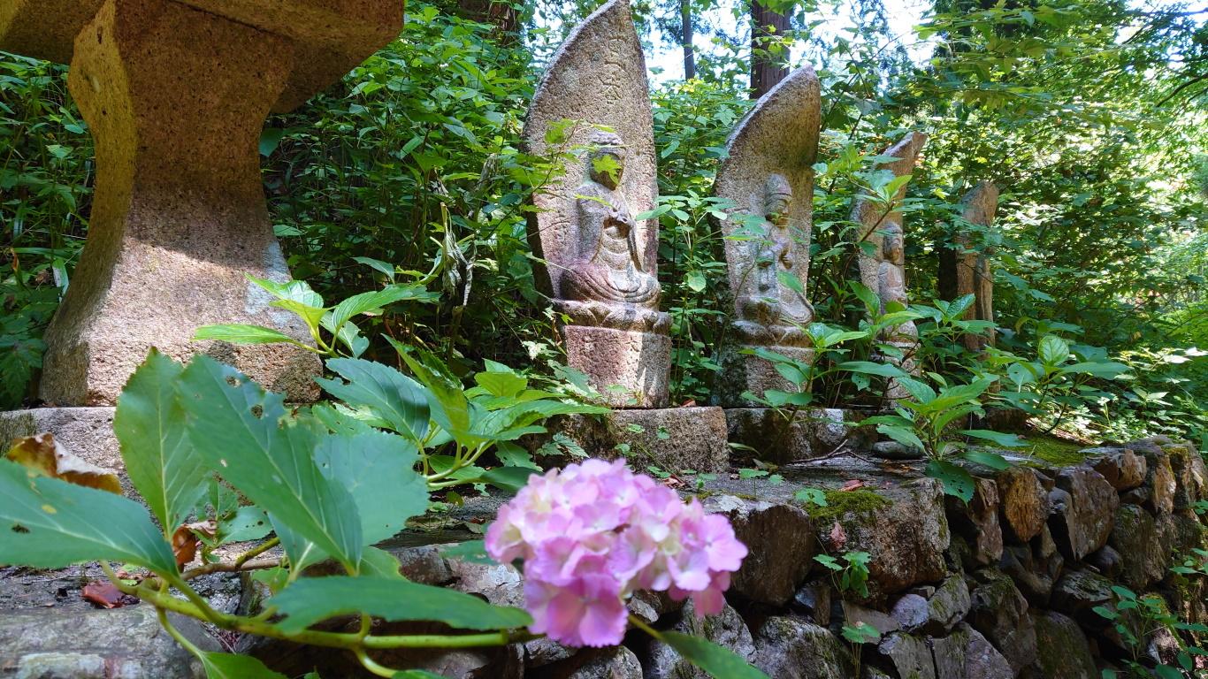 紫陽花と満願寺の石仏