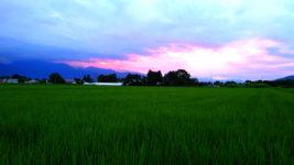 夕暮れ時の田んぼ