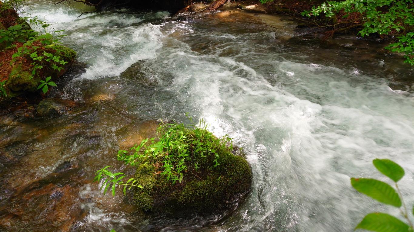 夏の油川の川面